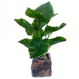 Planta decorativa in ghiveci