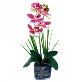 Ghiveci cu orhidee