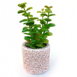 Plante suculente in ghiveci