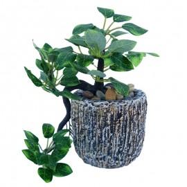 Ghiveci cu planta atarnatoare
